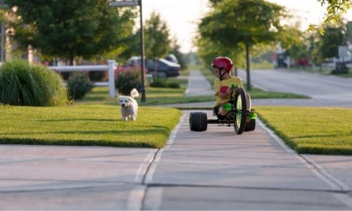 driveway and sidewalk with kid and dog